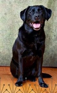 Hank, a PHS therapy dog, Dies Unexpectedly